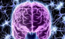 9 غذایی که دشمن مغز هستند