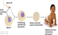 شکل جنین در ماه اول