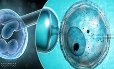 مراقبت بعد از IVF
