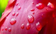 دانه های قرمز روی پوست بدون خارش