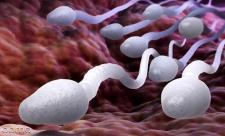 14 سوال رایج شما درباره اسپرم