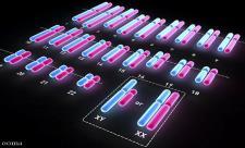 تست ژنتیک کاریوتایپ چیست و تفسیر آن