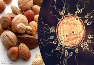 20 خوراکی افزایش دهنده اسپرم