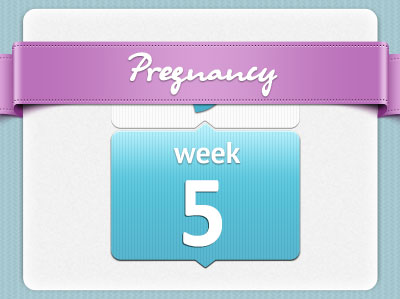 هفته پنجم بارداری، هفته 5 بارداری