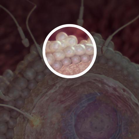 تخمک همراه با لایه سلول محافظت کننده