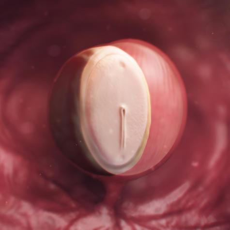 رشد جنین در هقته چهارم بارداری