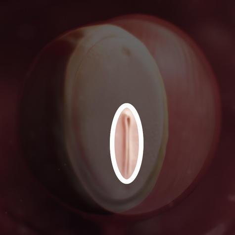 مهاجرت سلولی جهت تشکیل جنین اولیه