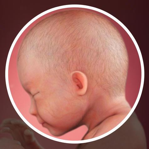 توسعه نورون ها و اعصاب مغزی جنین در هفته بیست و نهم بارداری