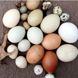 تخم مرغ و پروتئین