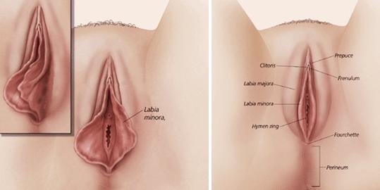 عكس عمل زيبايي دستگاه تناسلي زنان