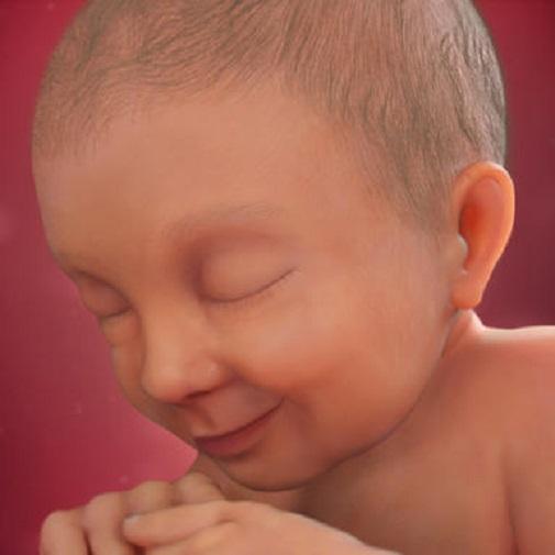 رشد جنین در هفته سی و هفتم بارداری
