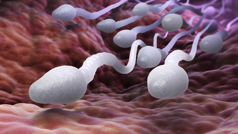 7 باورغلط درباره اسپرم و بارداری