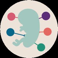 آغاز تشکیل اندام های ضروری در هفته هشتم بارداری