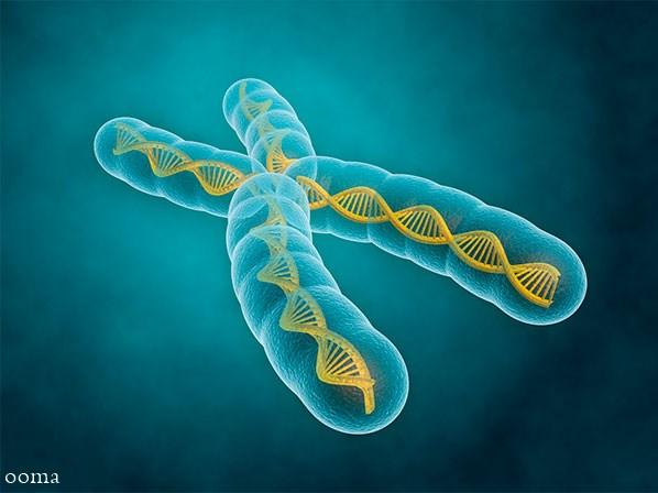 تست ژنتیک کاریوتیپ