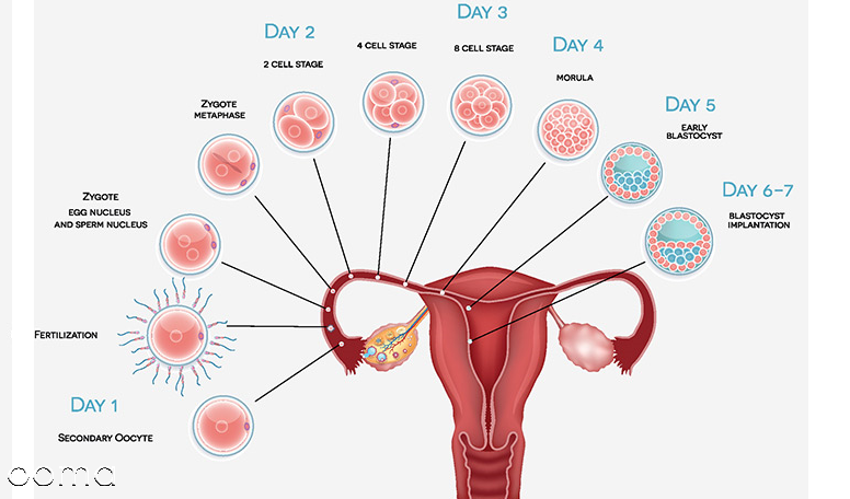 لکه بینی در اوایل بارداری چند روز طول می کشد؟